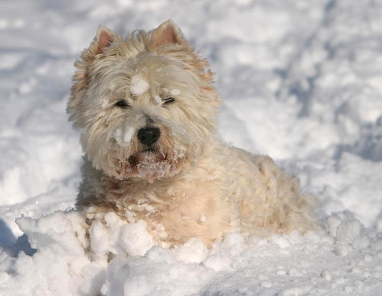een echte sneeuw liefhebber