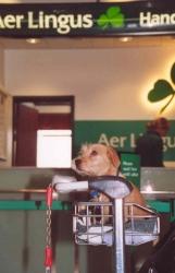 Twister-op-vliegveld-Dublin